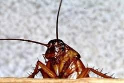 Советы как можно уничтожить тараканов в квартире
