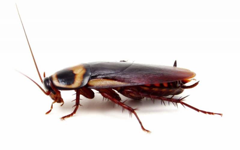 Рекомендуем состав средства от тараканов для быстрого уничтожения в квартире