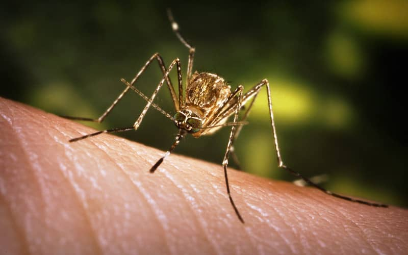 Народные средства от комаров