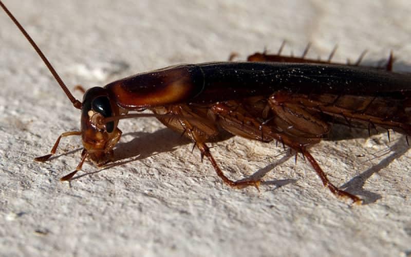 Репелленты против тараканов Раптор, Дихлофос, Raid