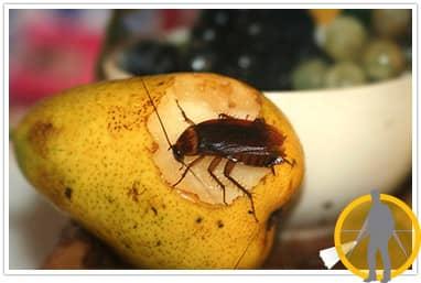 Предлагаем избавиться от тараканов
