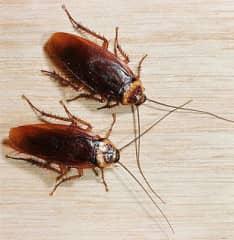 приманки для уничтожения тараканов