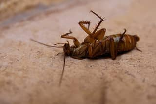 Как травить тараканов - инструкция