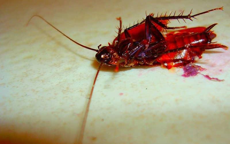 Способы обработки от тараканов борной кислотой и Raid, Combat, Форсайт, Get
