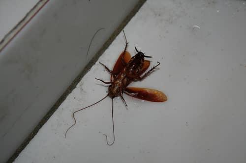 Причины, заказать уничтожениие тараканов