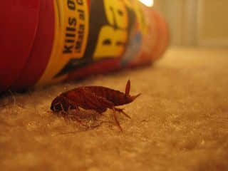 избавление квартиры от тараканов