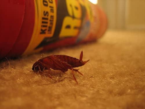 чем травить тараканов в квартире