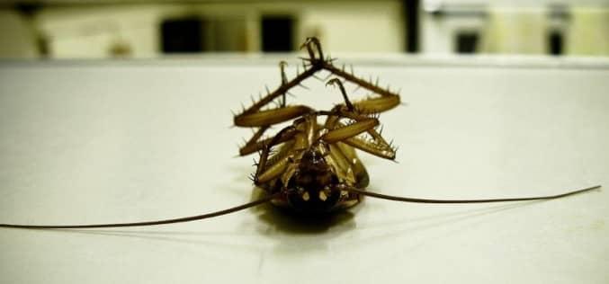 Почему для уничтожения тараканов стоит вызвать санэпидемстанцию на дом