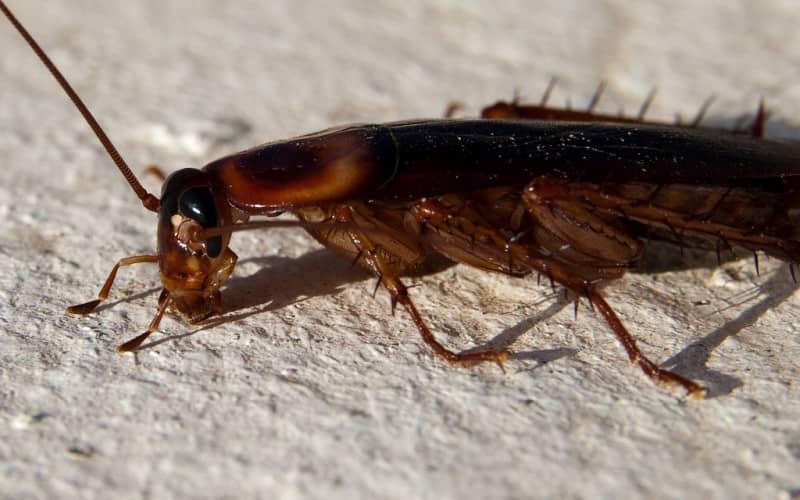 Отпугиватель от тараканов — как воздействуют на насекомых. Есть ли польза
