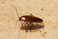 Как потравить тараканов в квартире с ликвидацией колонии насекомых