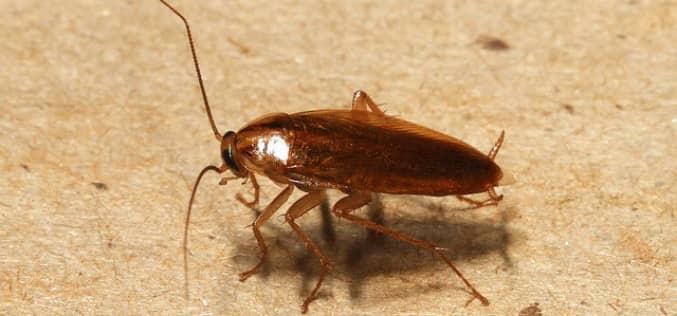 Как избавиться от тараканов в квартире, перекрыв насекомым доступ к еде и воде