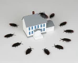 Уборка квартиры спасает от тараканов