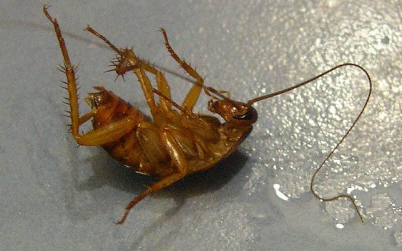Комплексная травля тараканов через контроль и уничтожение насекомых