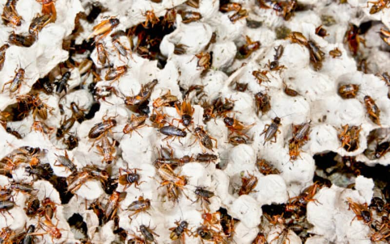 Как уничтожить тараканов раз и навсегда