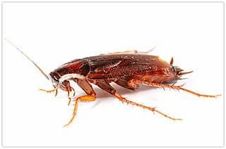 Надежное выведение тараканов