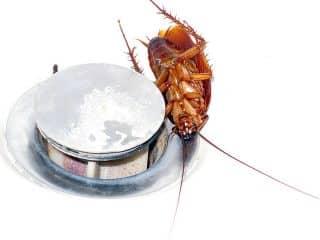 Быстрое выведение тараканов в квартиире