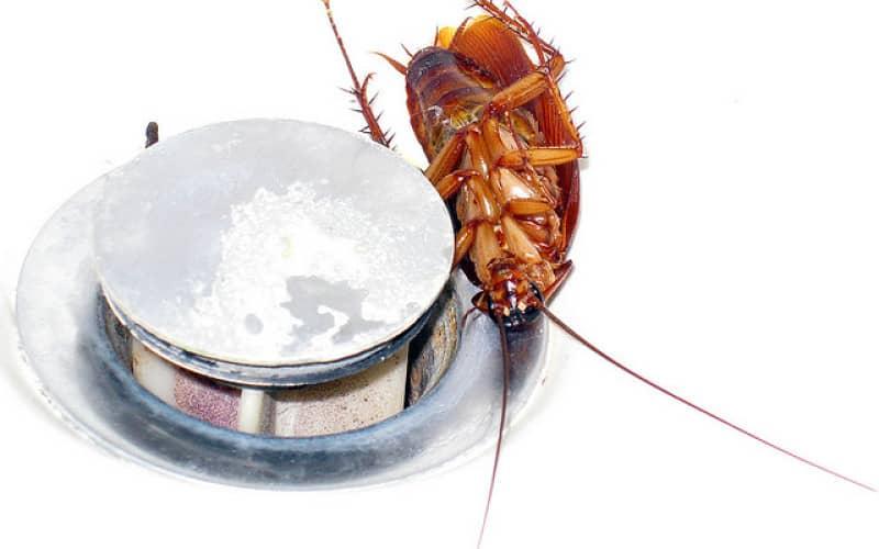 Надёжный способ выведение тараканов и как избавиться от насекомых навсегда
