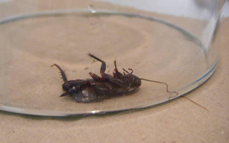 Причины, по которым завелись тараканы в квартире