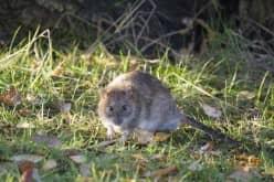 Описание принципа работы отпугивателя мышей и крыс
