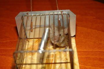 Отловим всех мышей в доме
