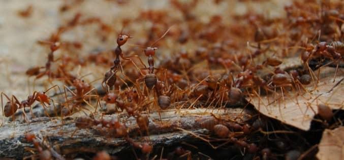 Жизненный цикл муравья, какие бывают муравьи