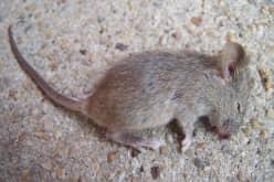 Отпугиватель грызунов ГРАД А-550УЗ для борьбы с мышами и крысами