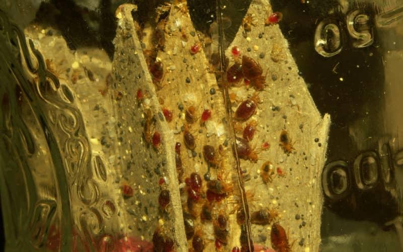 проверка на наличие глистов в организме человека