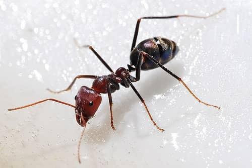 средство борьбы с муравьями