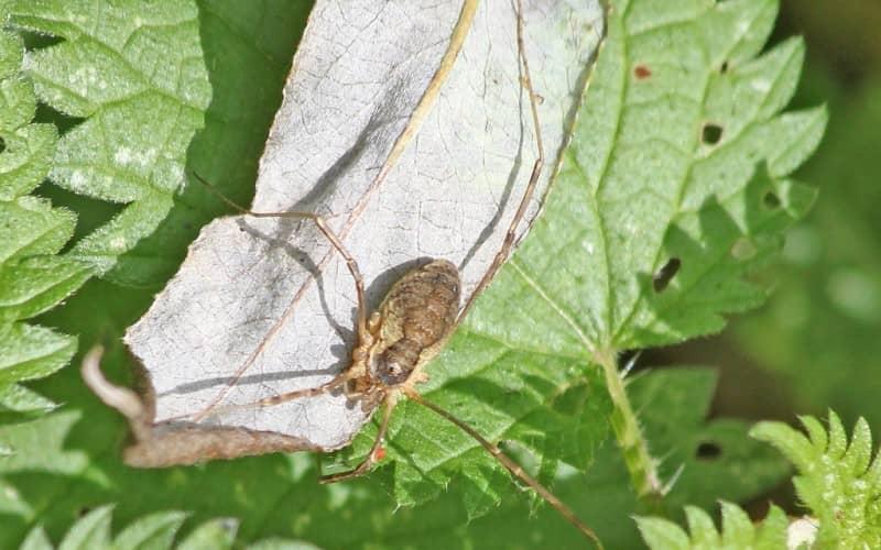 Общие сведения про паутинного клеща. Какой вред приносят клещи