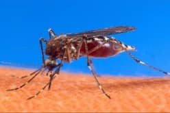Осторожное использование средств от комаров при нанесении на кожу