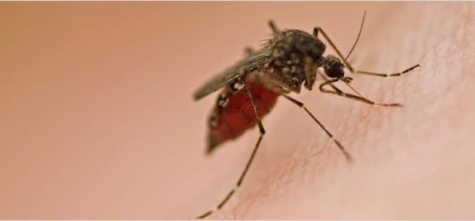 Меры для уничтожения комаров, выбор ловушек и репеллентов
