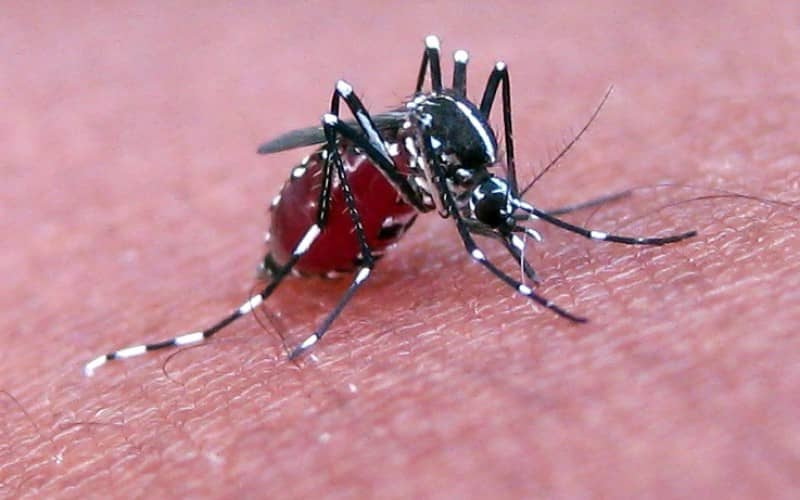 Защита от укусов комаров детей. Выбор средств и применение