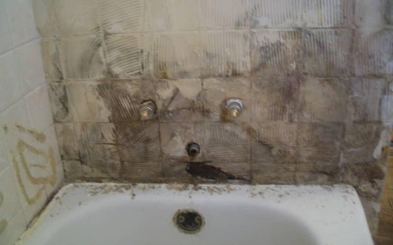 Удаление плесени со стены, способы очистки любых поверхностей
