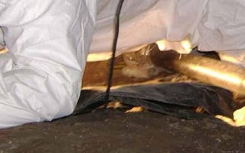 Чем опасно наличие плесени, как найти очаг возникновения грибка в квартире